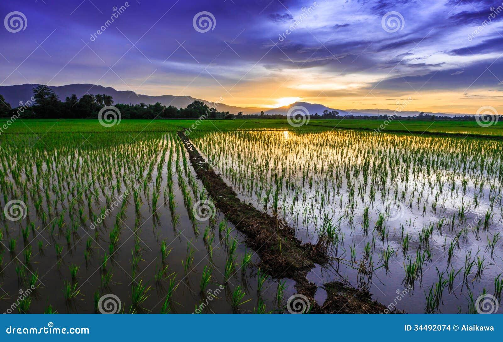 Ung risfält mot reflekterad solnedgånghimmel