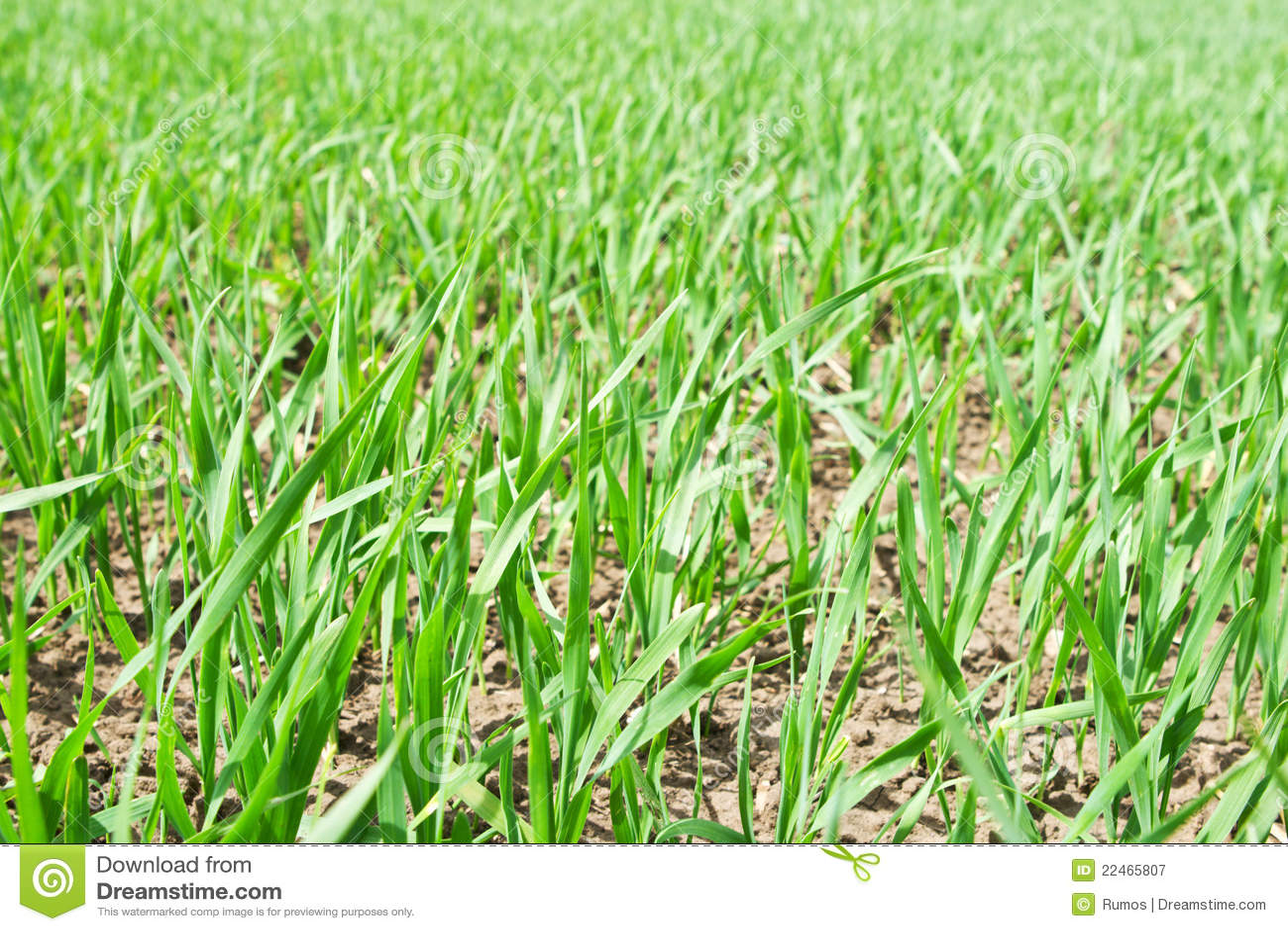 minecraft how to grow wheat