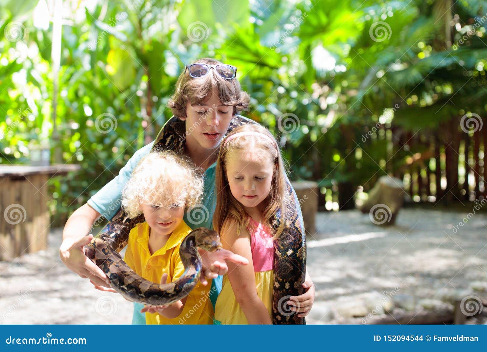 Ungar rymmer pytonormormen på zoo Barn och reptil