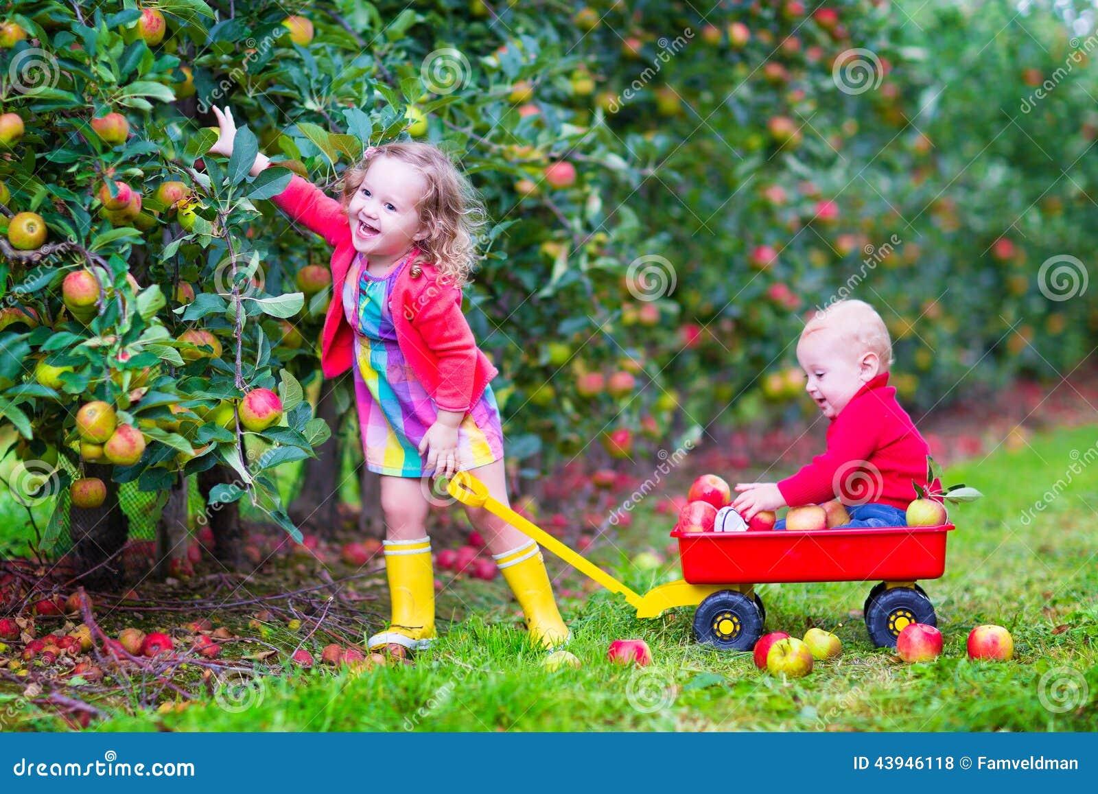 Ungar som spelar i en äppleträdgård