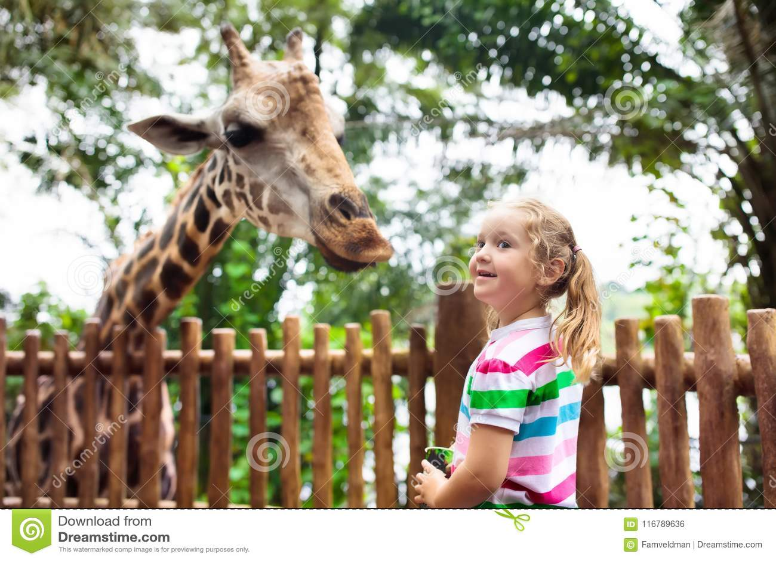 Ungematningsgiraff på zoo Barn på safari parkerar