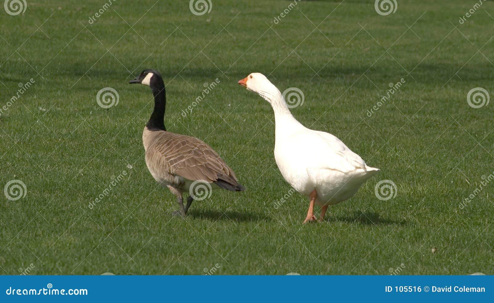 Ungerade Paare