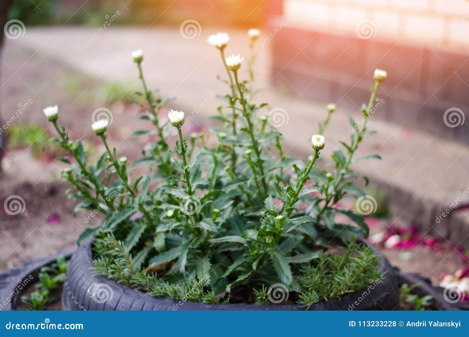 Ungewöhnliches Blumenbeet Im Garten Ein Blumenbeet Aus Alten