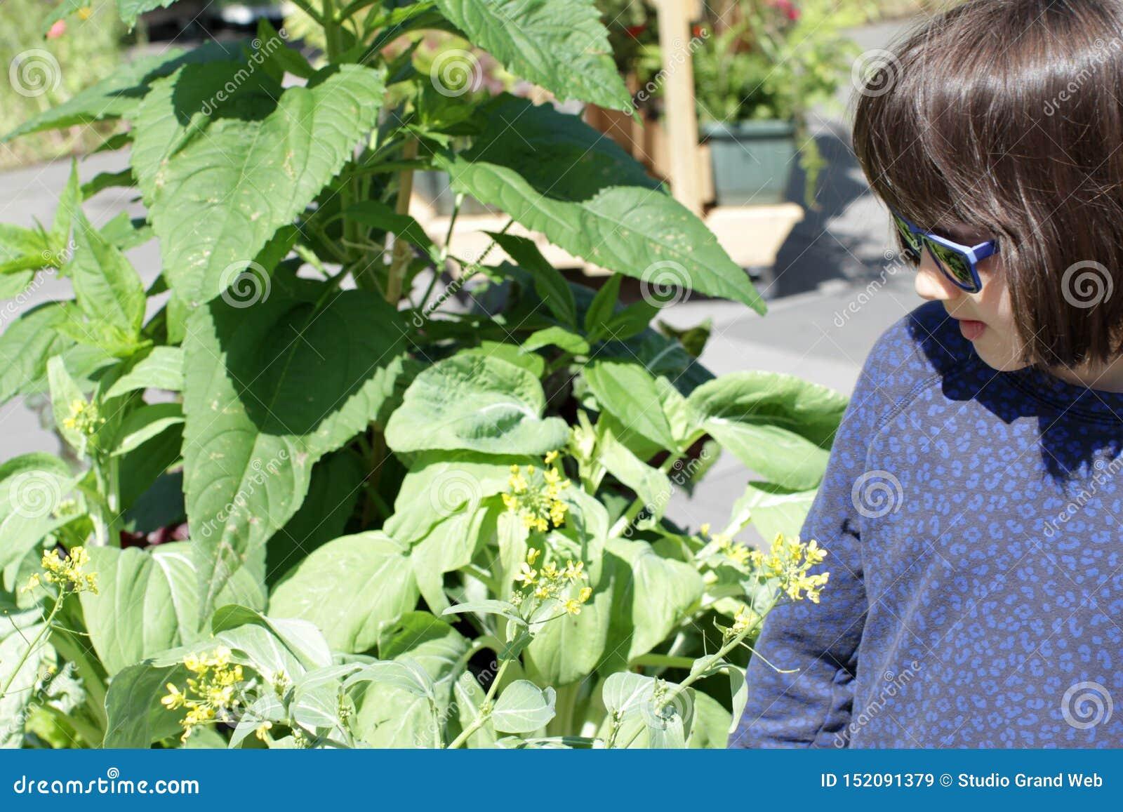 Ungt grundat le barn som ser en självodlat senapsgult växt