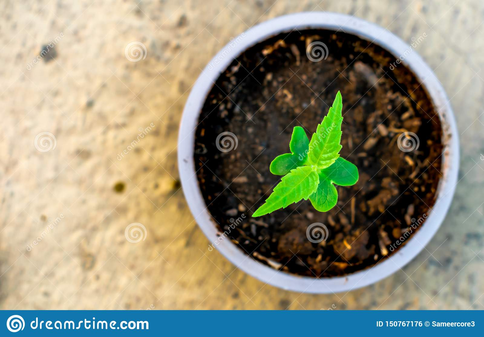 Ungt träd som växer i en omsorg för jord för natur för koppjordgräsplan