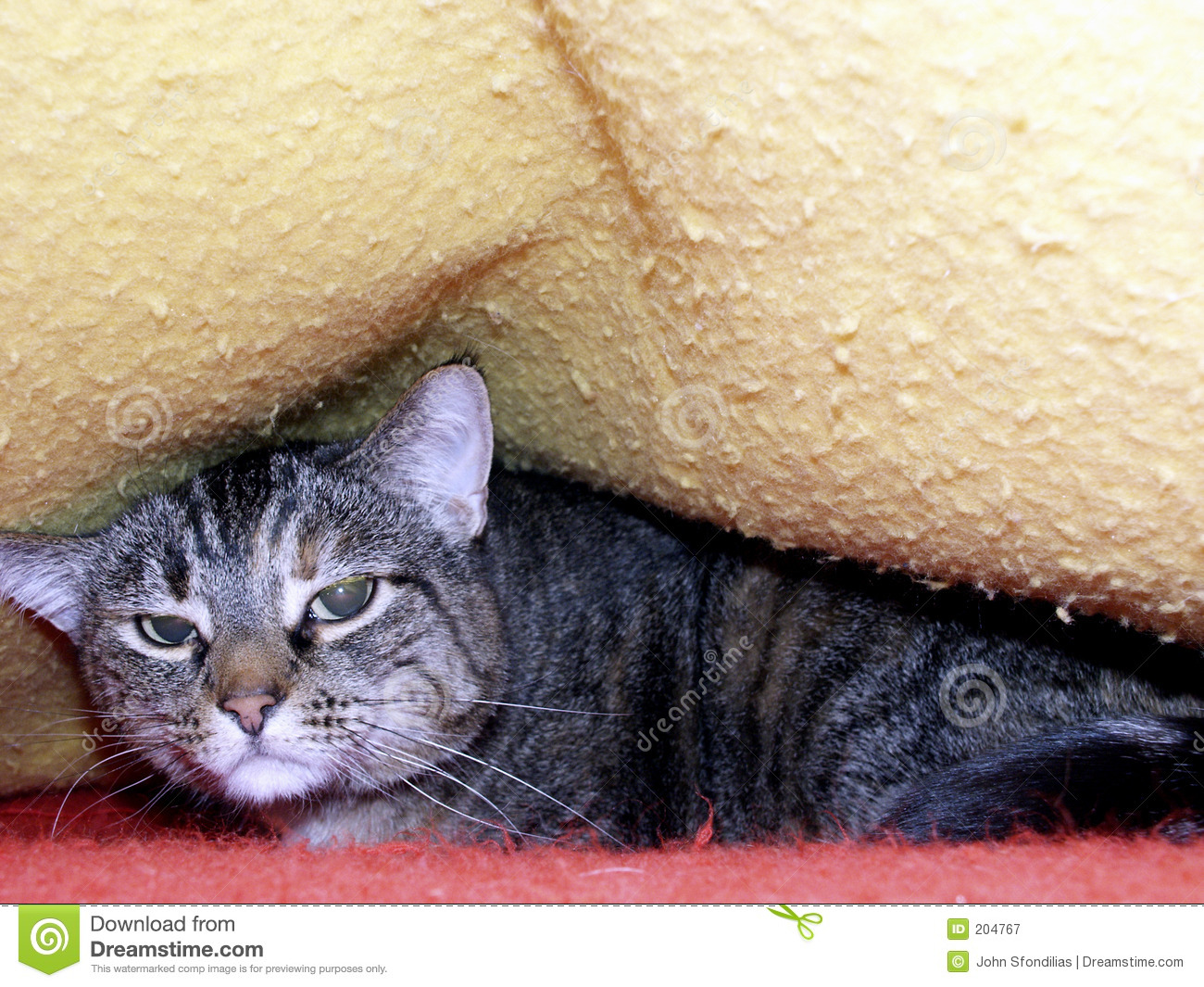 Unhappy Cat Royalty Free Stock Photography - Image: 204767