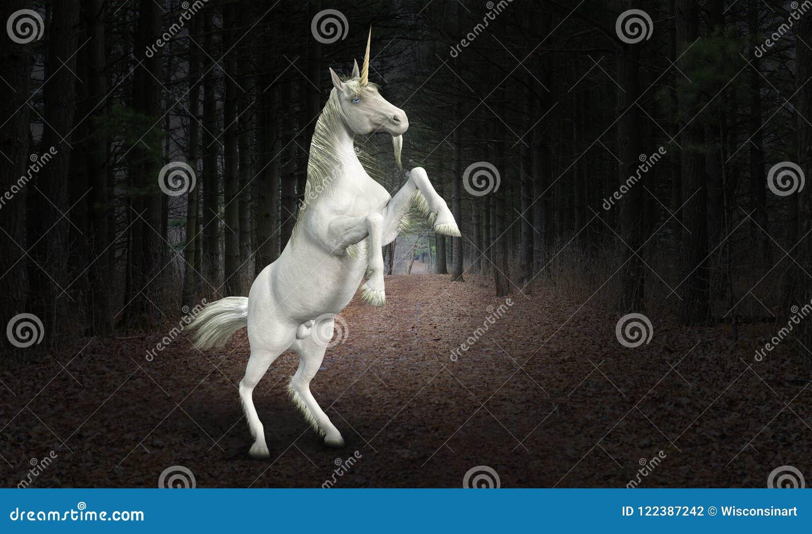 Unicorn Horse natur, djurliv, skog