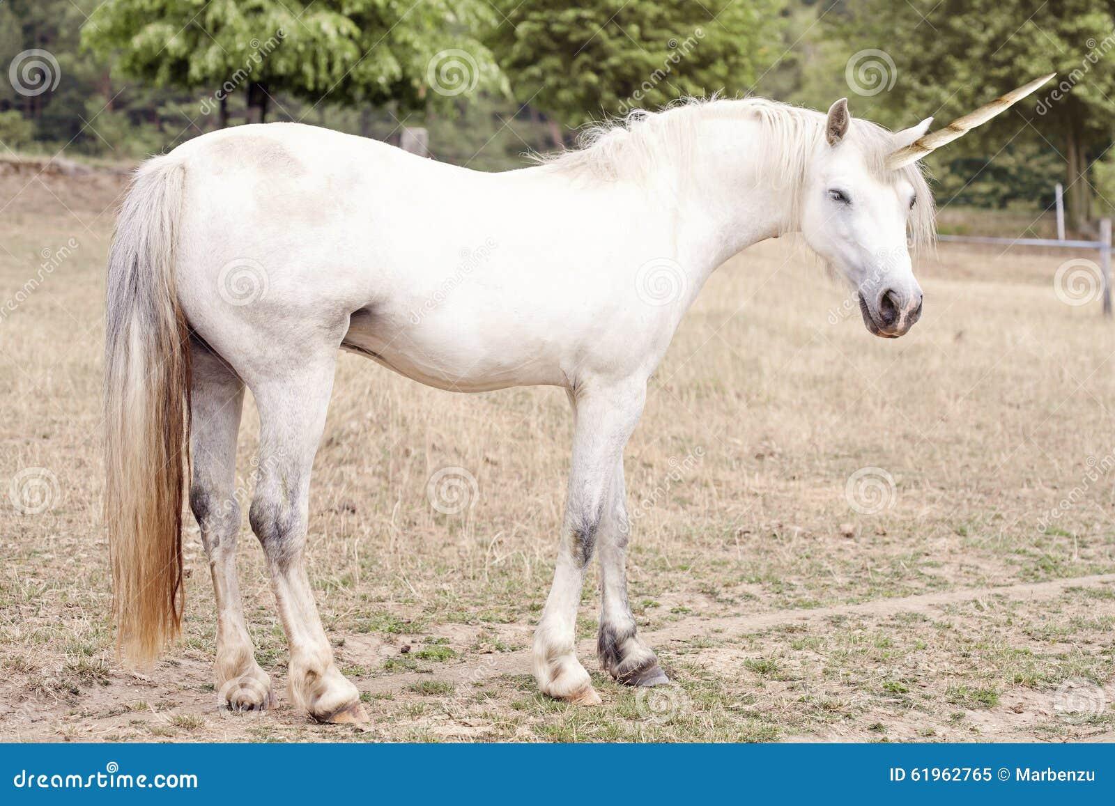 Nature Images 2mb: Unicorn Stock Photo