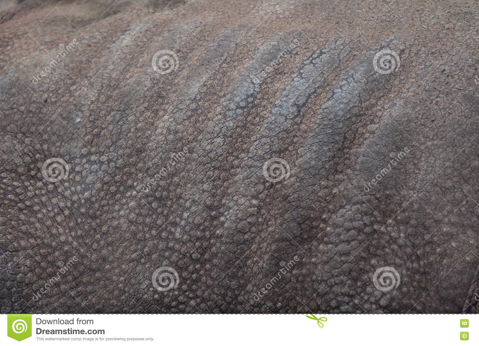Unicornis носорога индийского носорога безшовная текстура кожи tileable