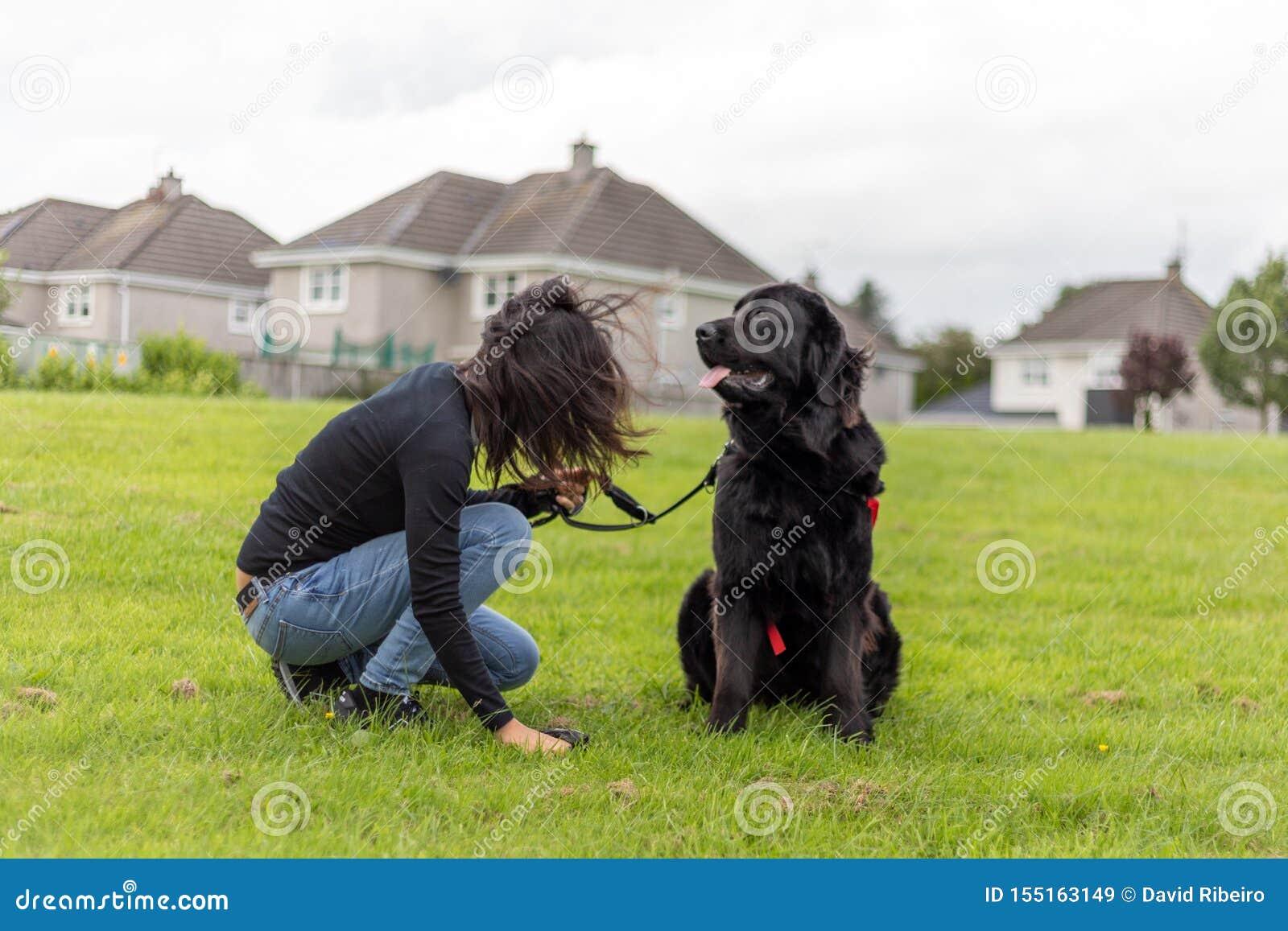 Unidentifiable kobiety podnoszą w górę psa poo w trawie podczas gdy pies czeka
