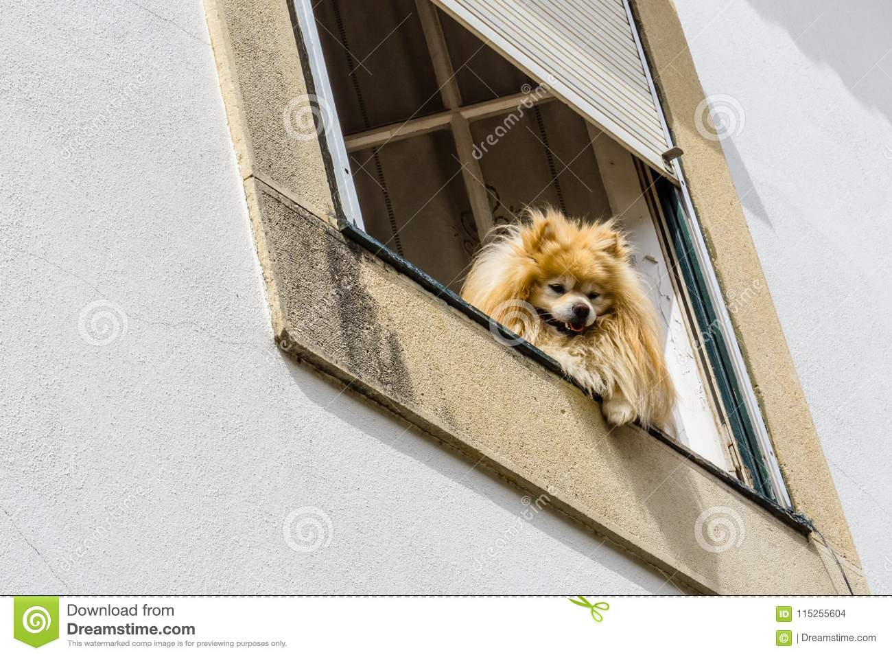 Unidentified Dogs Watch From Their House Window As Tourists Pass