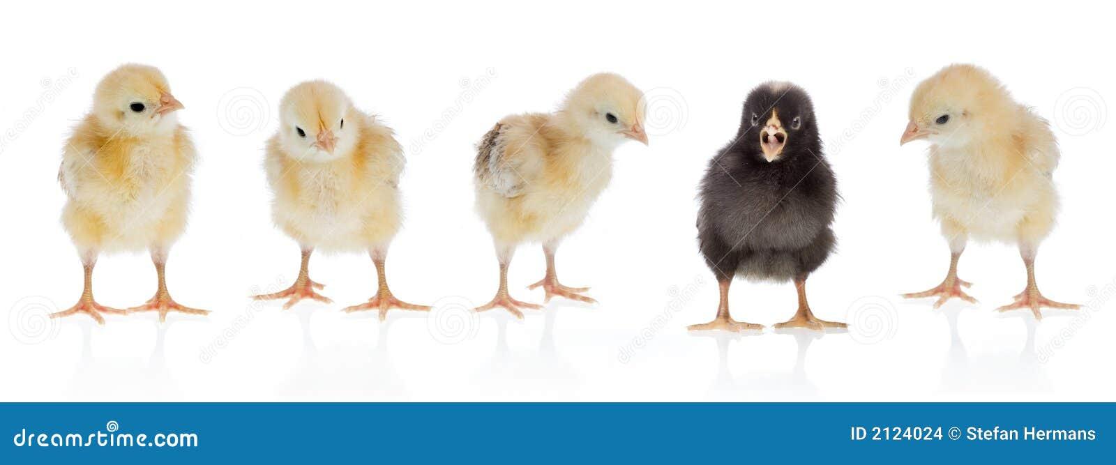 Unikalny kurczaka