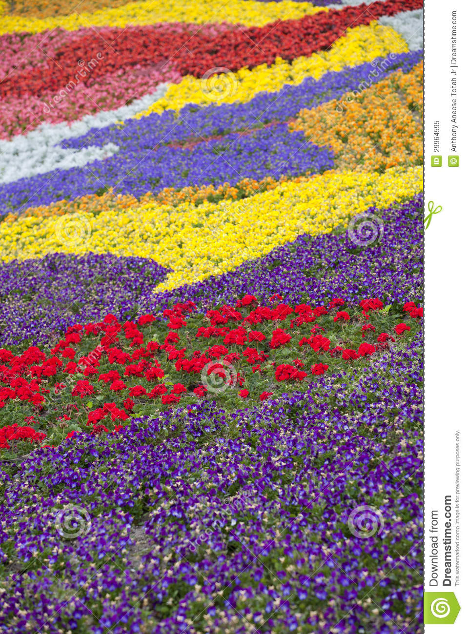 Painting with flowers royalty free stock photo image for What makes flowers different colors