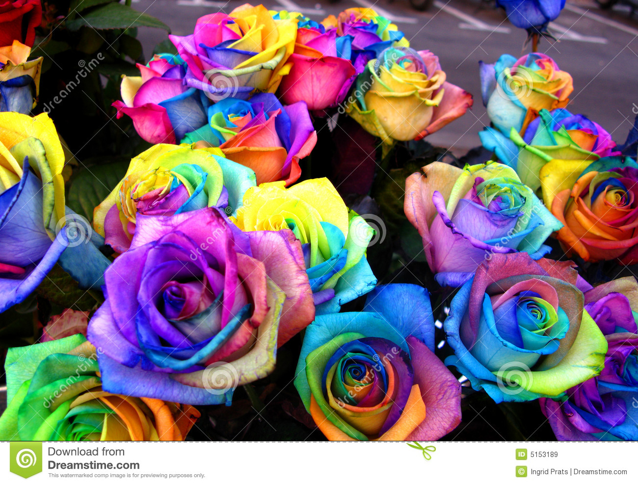 Wedding Bouquets With Rainbow Roses : Unique rainbow roses royalty free stock images image