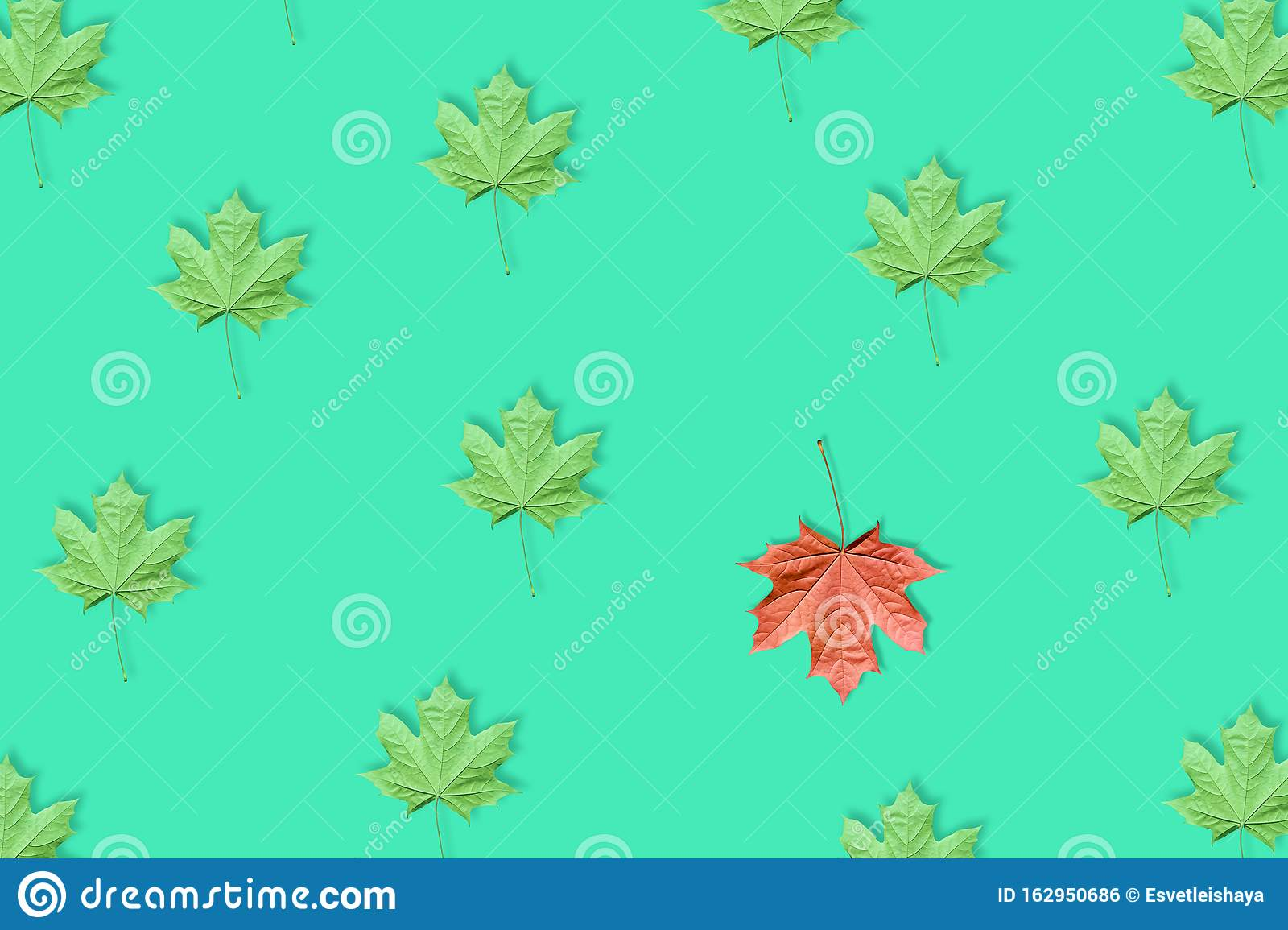Unique Red Leaf Among Many Green Leaves Isolated On Blue Or Mint Background Stock Photo Image Of Cover November 162950686