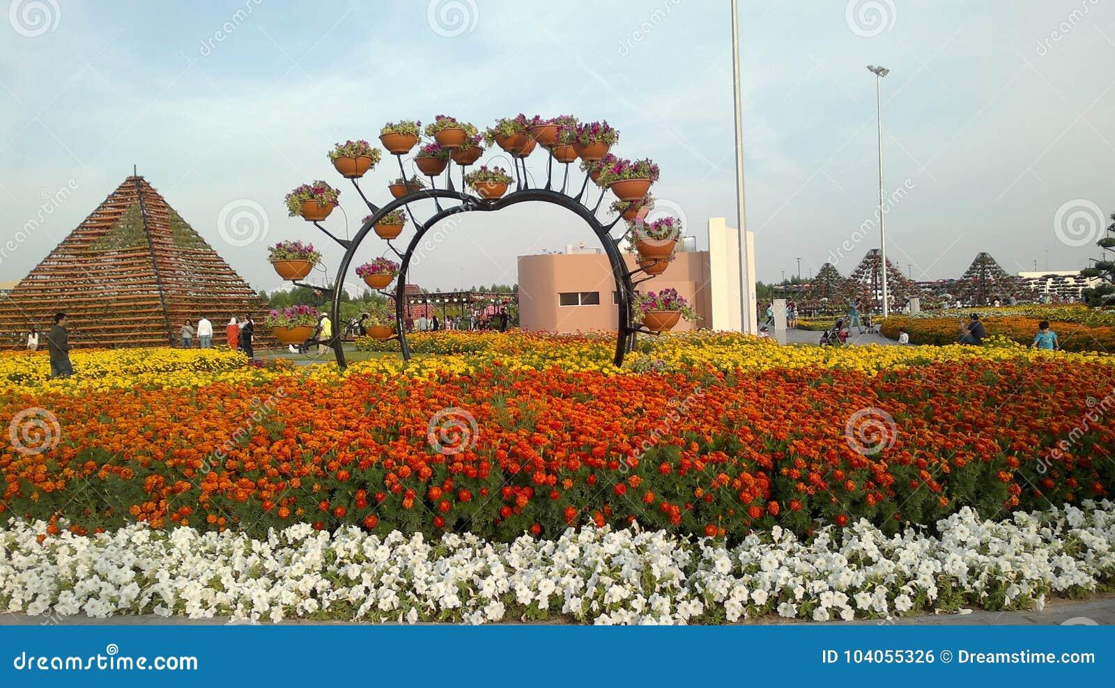Miracle Garden, Dubai, United Arab Emirates Editorial Photo - Image ...