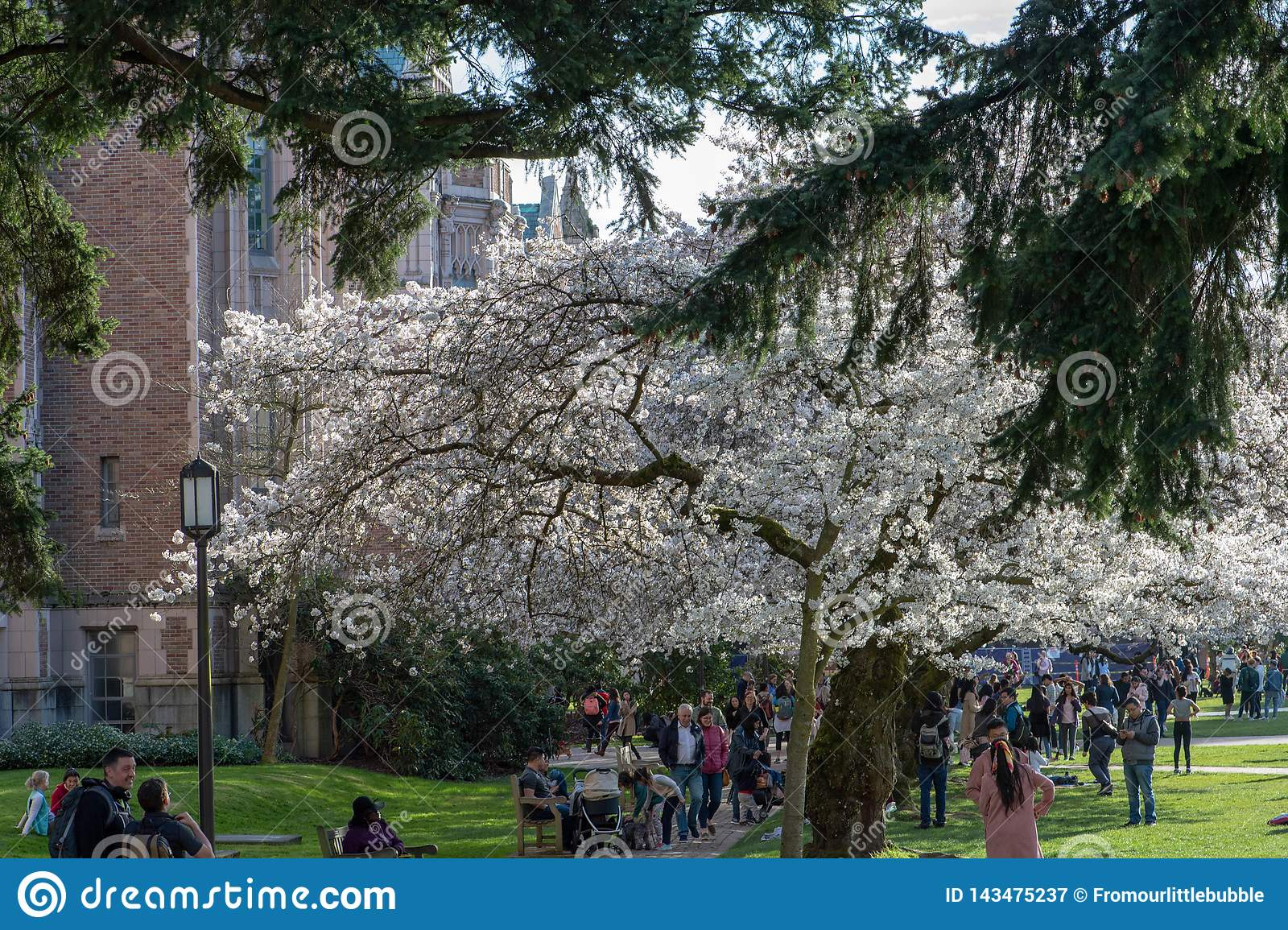 Università di ospiti di Washington Cherry Blossom