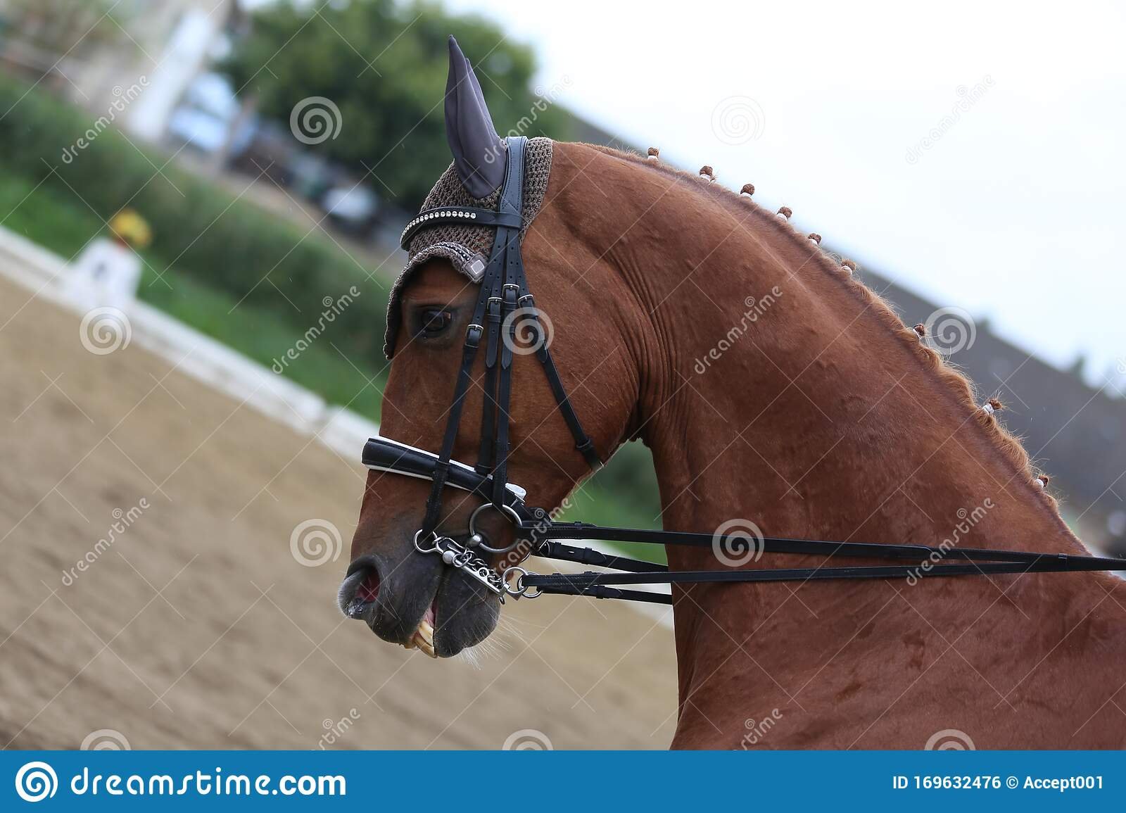Unknown Contestant Rides At Dressage Horse Event In Riding Ground Outdoors Stock Photo Image Of Competition Girth 169632476