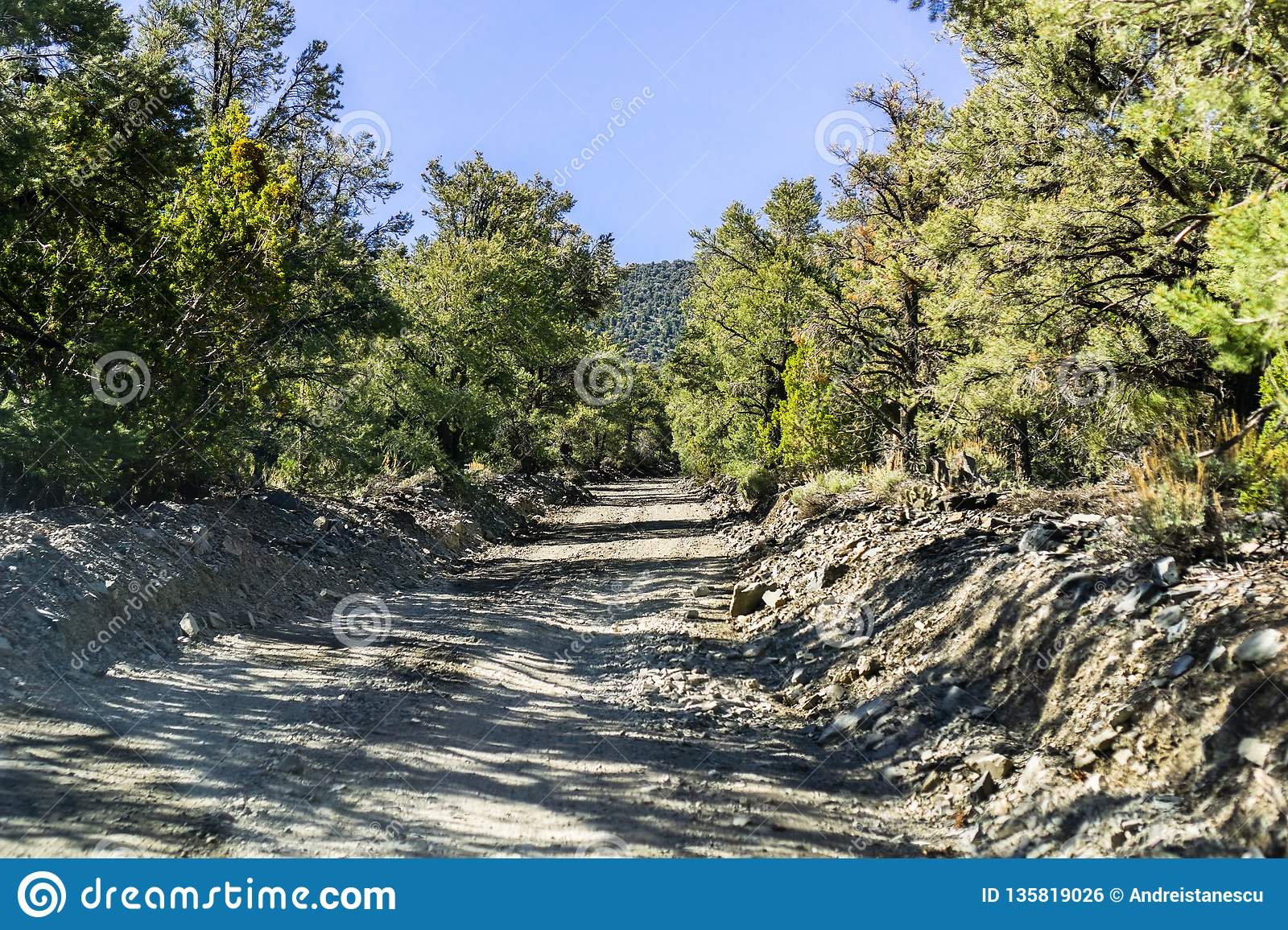 Unpaved Road Lined Up With Juniper And Pine Trees In The ...
