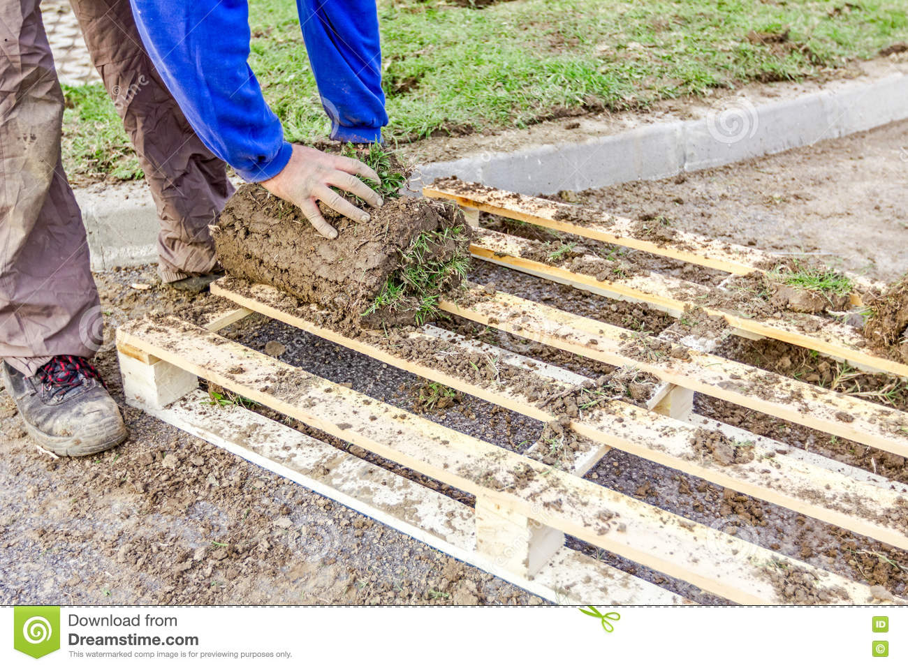 Unrolling Grass, Applying Turf Rolls For A New Lawn Stock Image