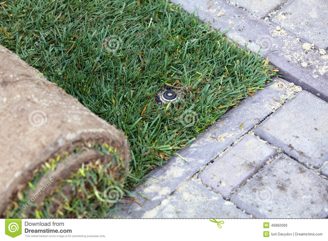 Nature S Carpet Lawn And Sprinkler