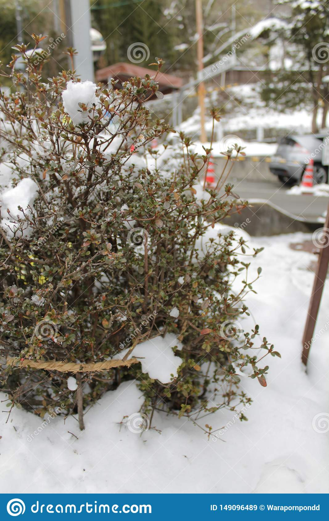 Unscharfe starke B?ume des Fotos im Schnee Winter