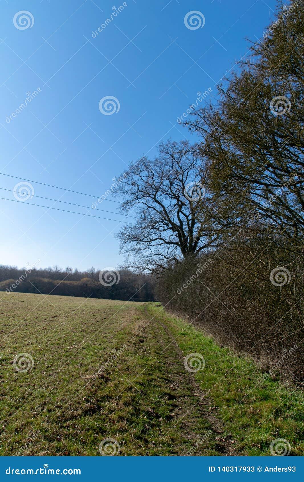 Unseasonally warmes Wetter als Jahreszeiten ändern vom Winter, um mit dem neuen Wachstum zu entspringen, das beginnt, auf Bäumen