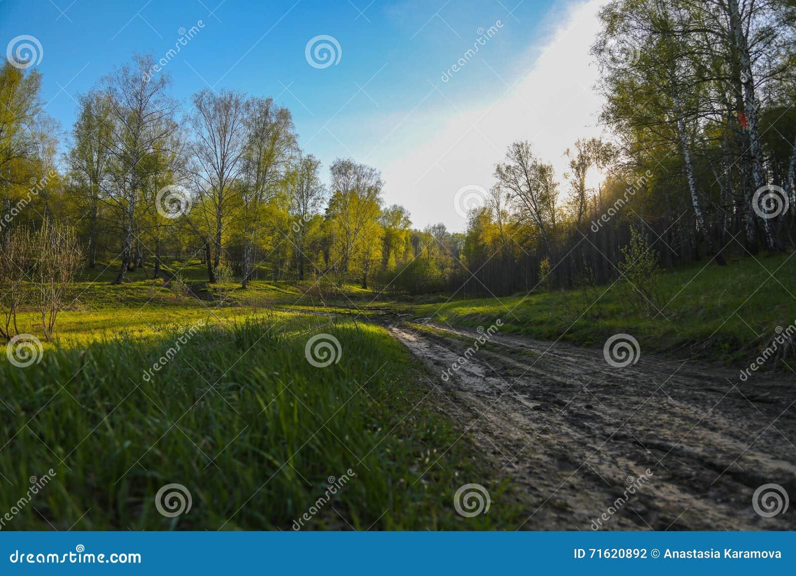 Unset in den Wald