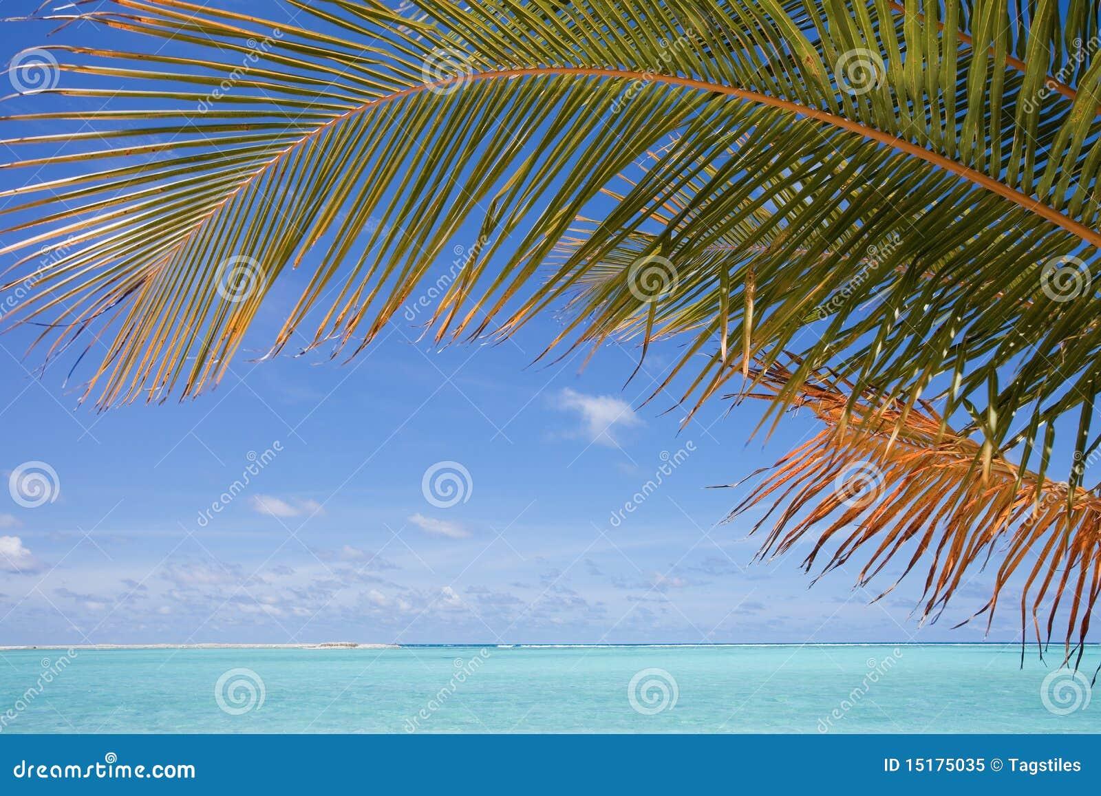 Download Unter Palmen stockbild. Bild von idyllisch, palmen, abkühlen - 15175035