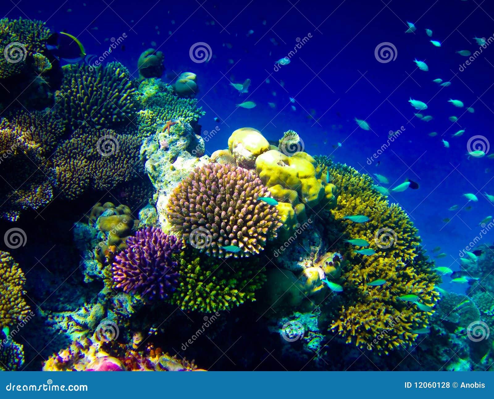 Unter Wasserwelt bei Maldives