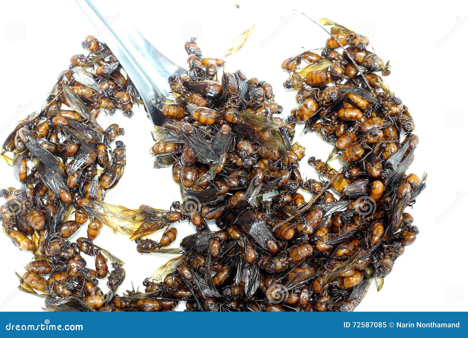 Was Hilft Gegen Ameisen In Der Küche