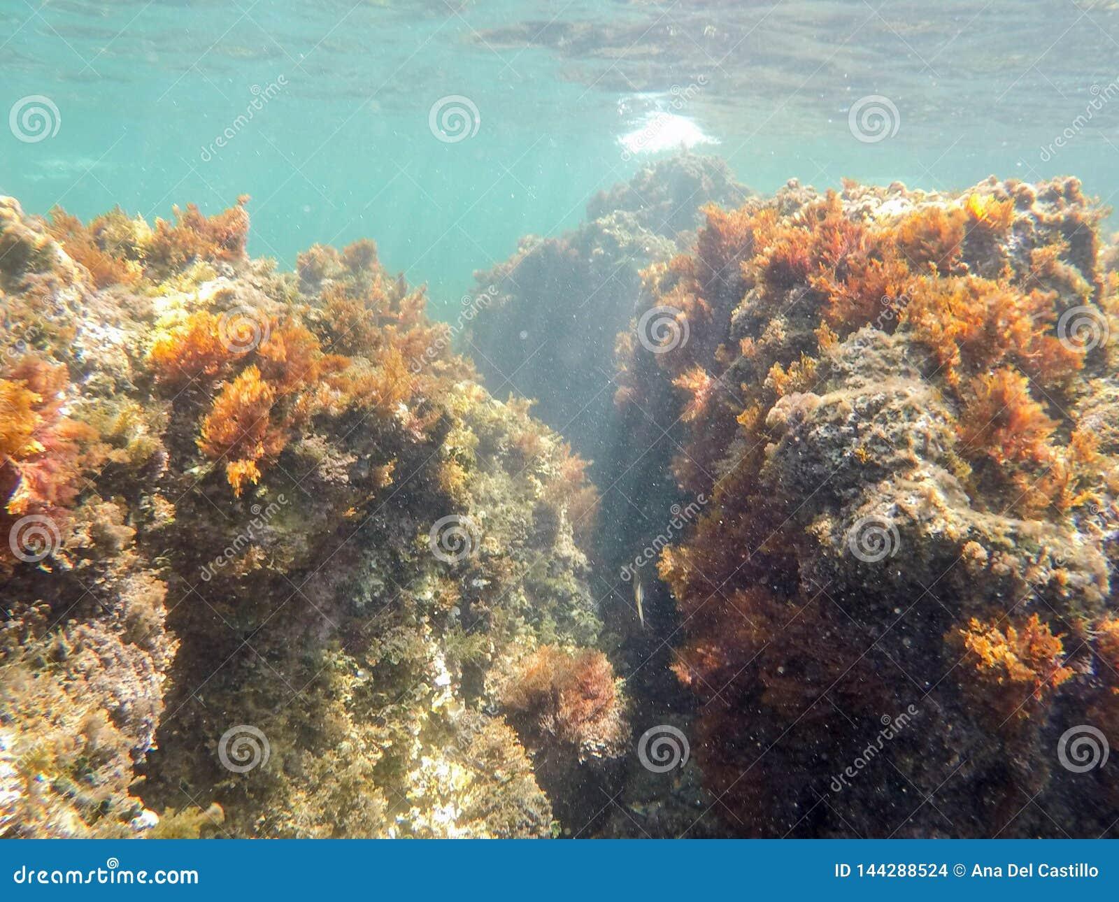 Unterwasserbild Las-Dienstturnus-Naturreservat Denia Alicante Spain
