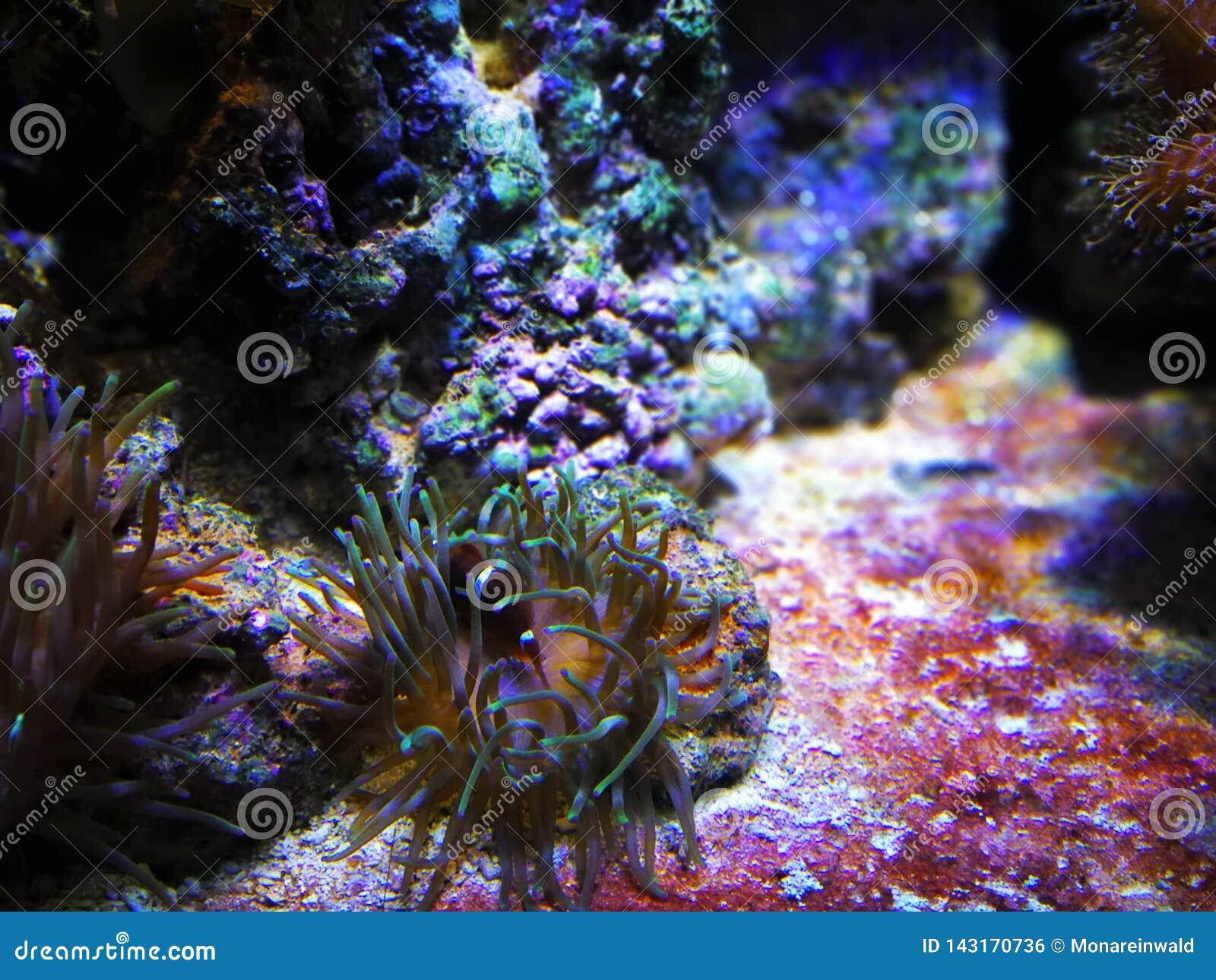 Unterwater世界在巴塞罗那在春天