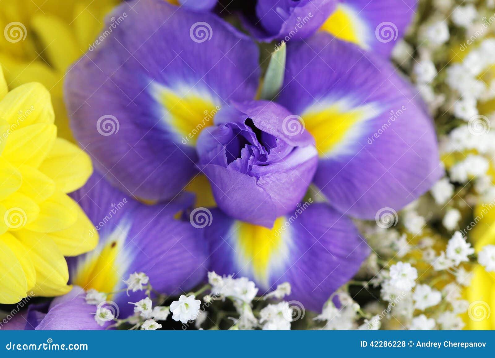 Unusual beautiful tender iris and yellow flowers background stock download unusual beautiful tender iris and yellow flowers background stock photo image of background izmirmasajfo