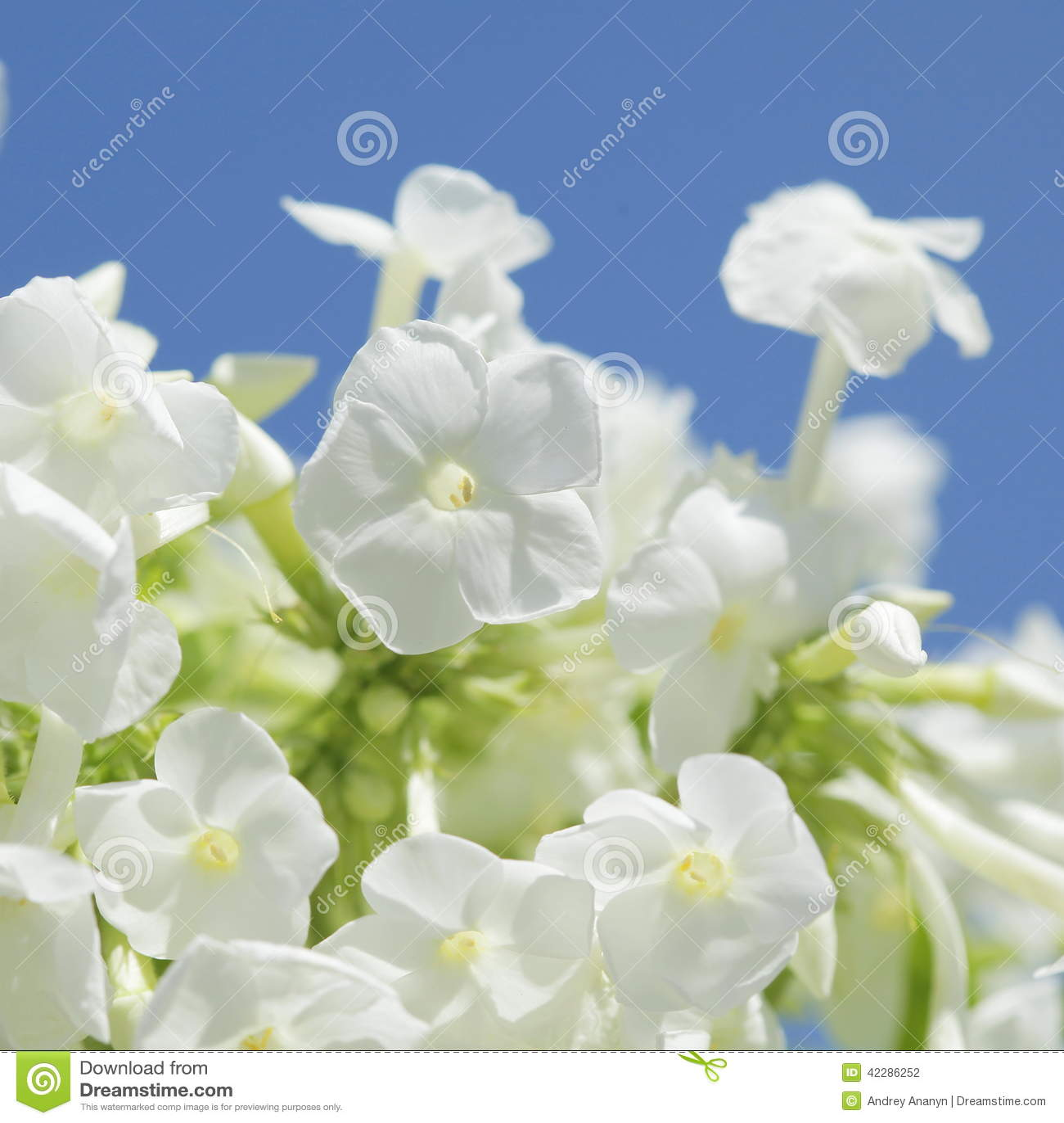 Unusual Beautiful Tender White Flowers Background Stock Photo
