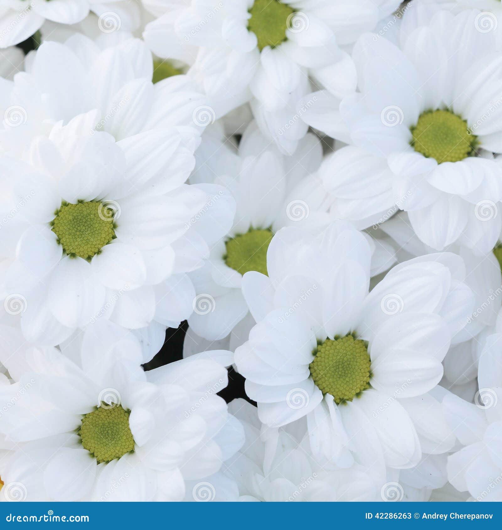 Unusual Beautiful Tender White Flowers Background Stock Image