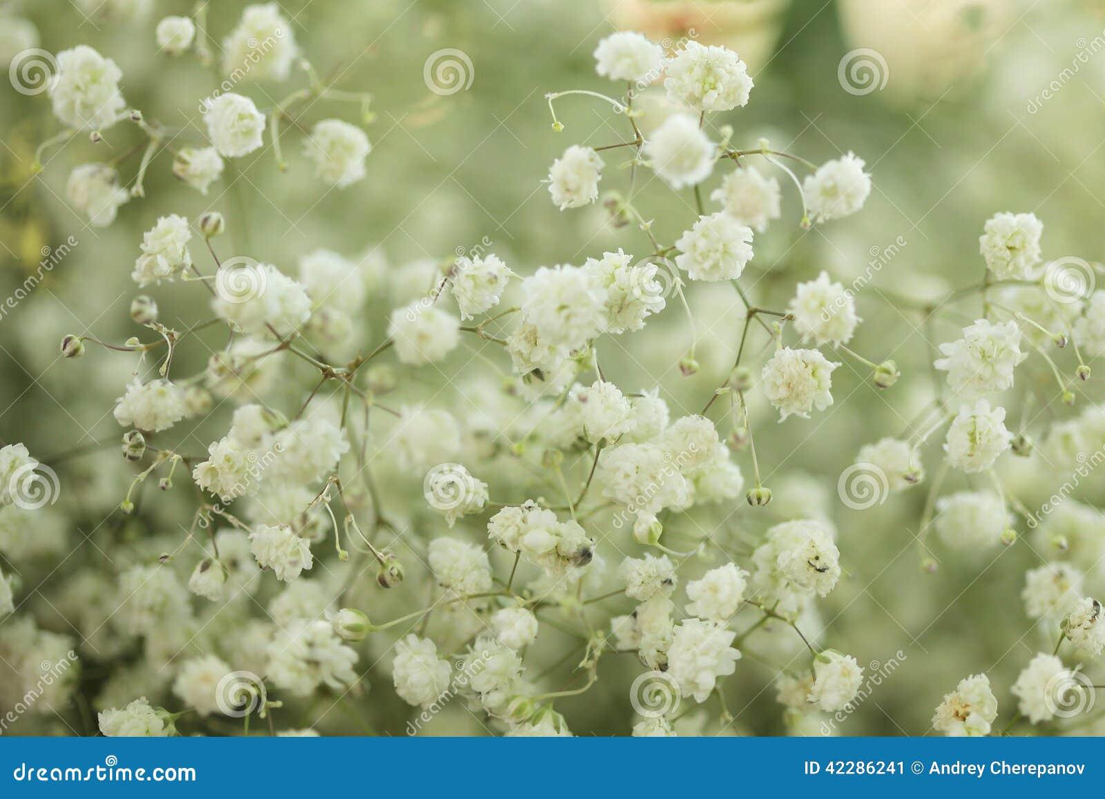 Unusual Beautiful White Flowers Background Stock Image Image Of