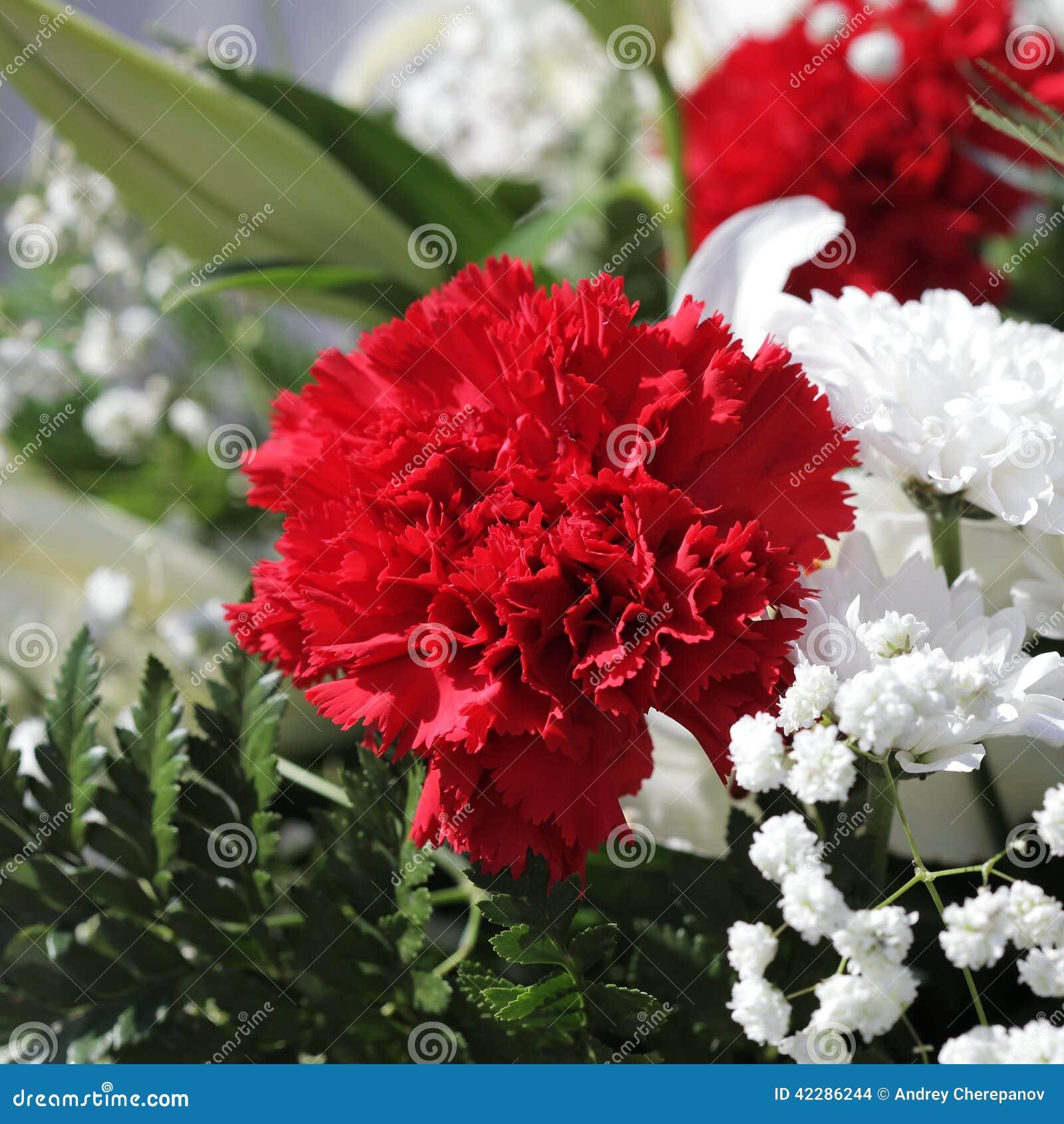 Unusual beautiful white and red flowers background stock photo download unusual beautiful white and red flowers background stock photo image of flower purple izmirmasajfo