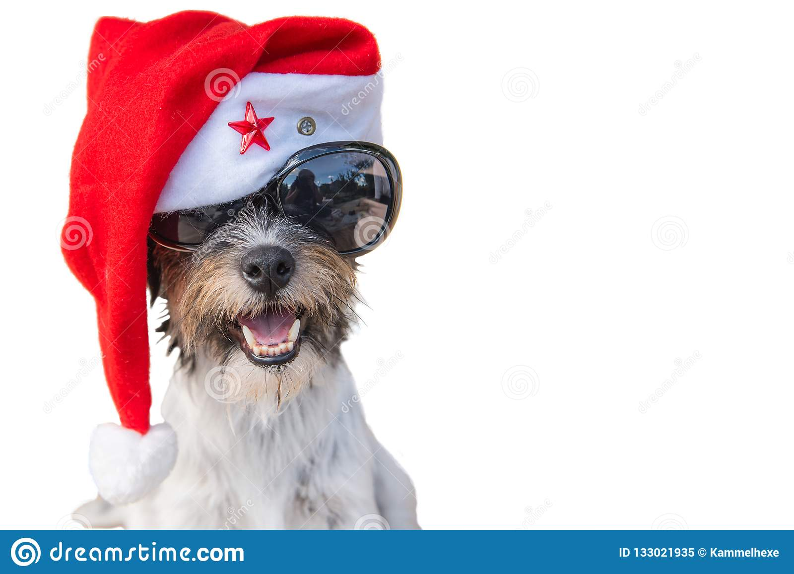 Unusual and curious smiling santa claus doggy portrait with glasses