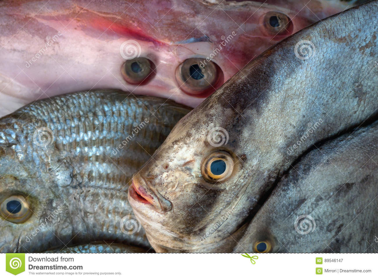 Unusual Exotic Saltwater Fish And Squid Carcass For Sale, Fish Are