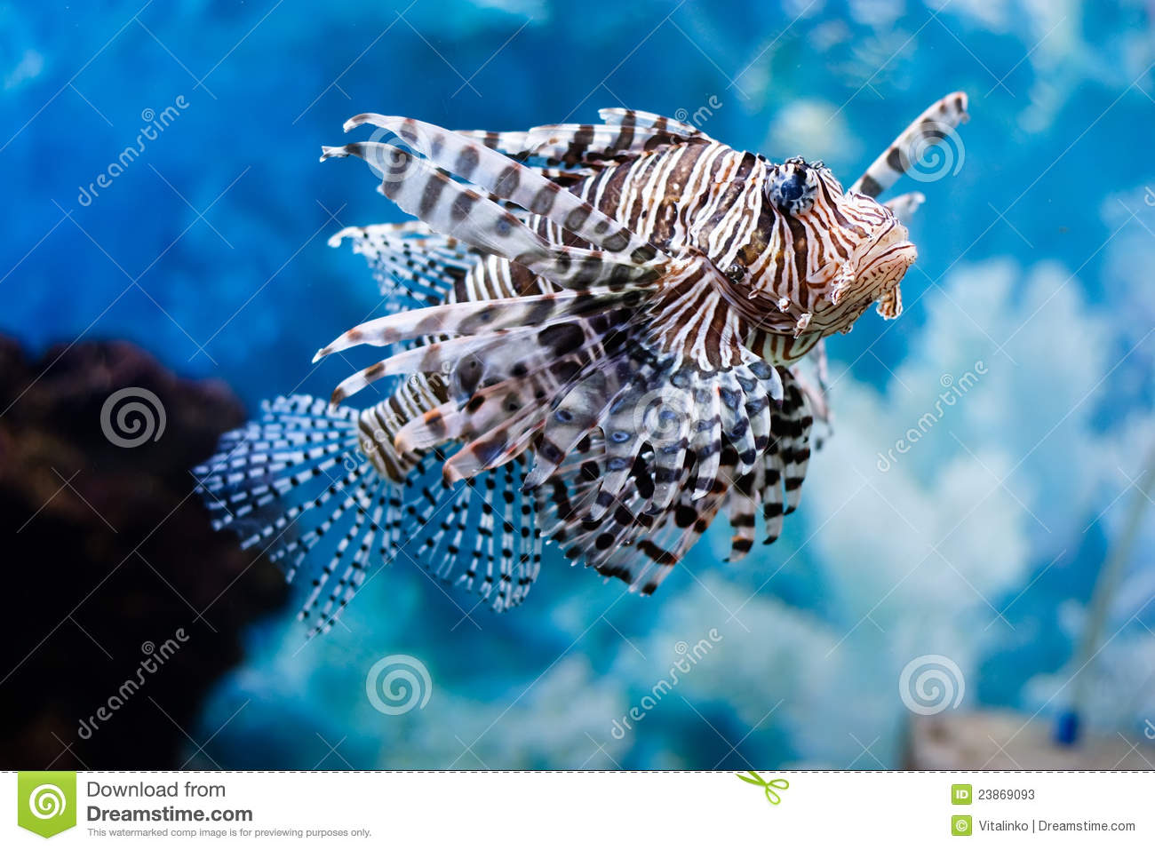 Unusual Fish Stock Photos Image 23869093
