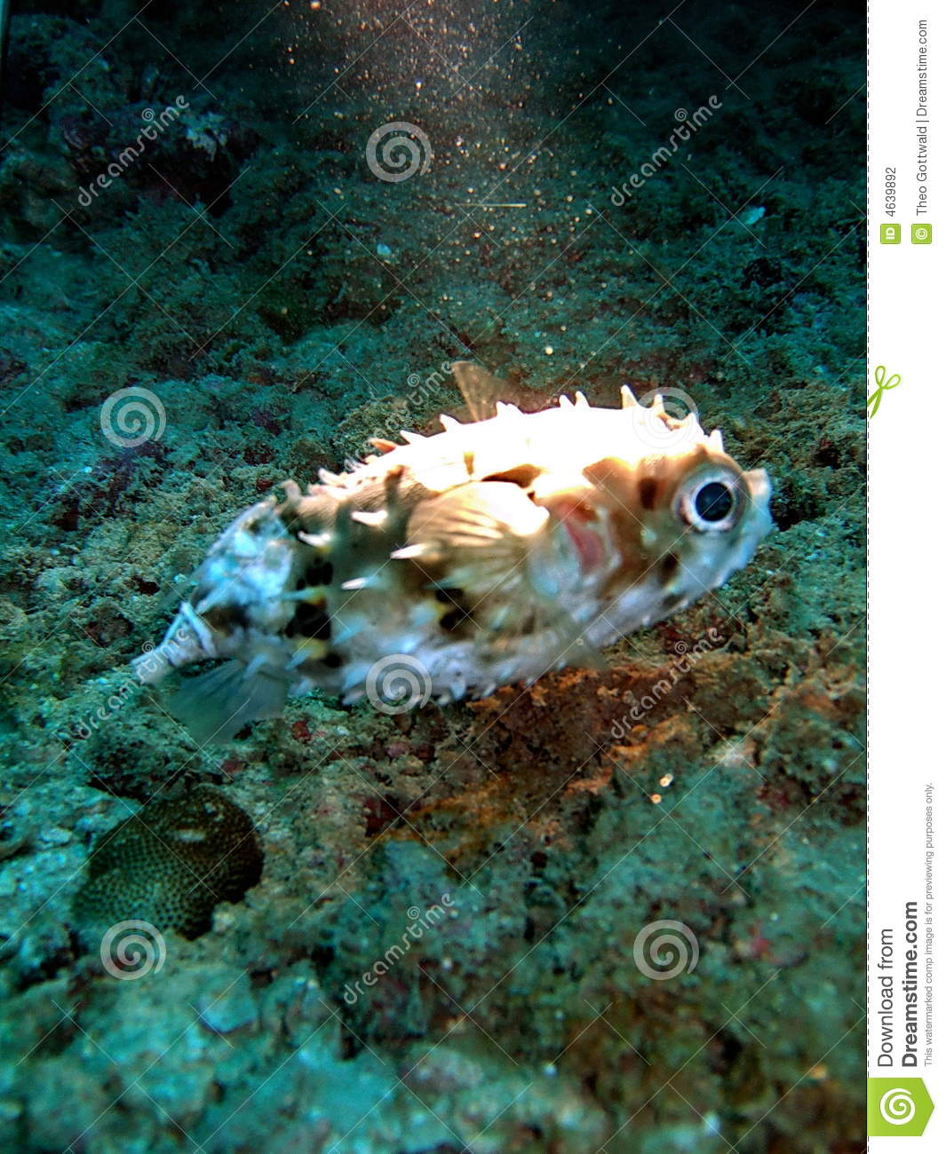 Unusual Fish In Coral Reef Stock Photography Image 4639892