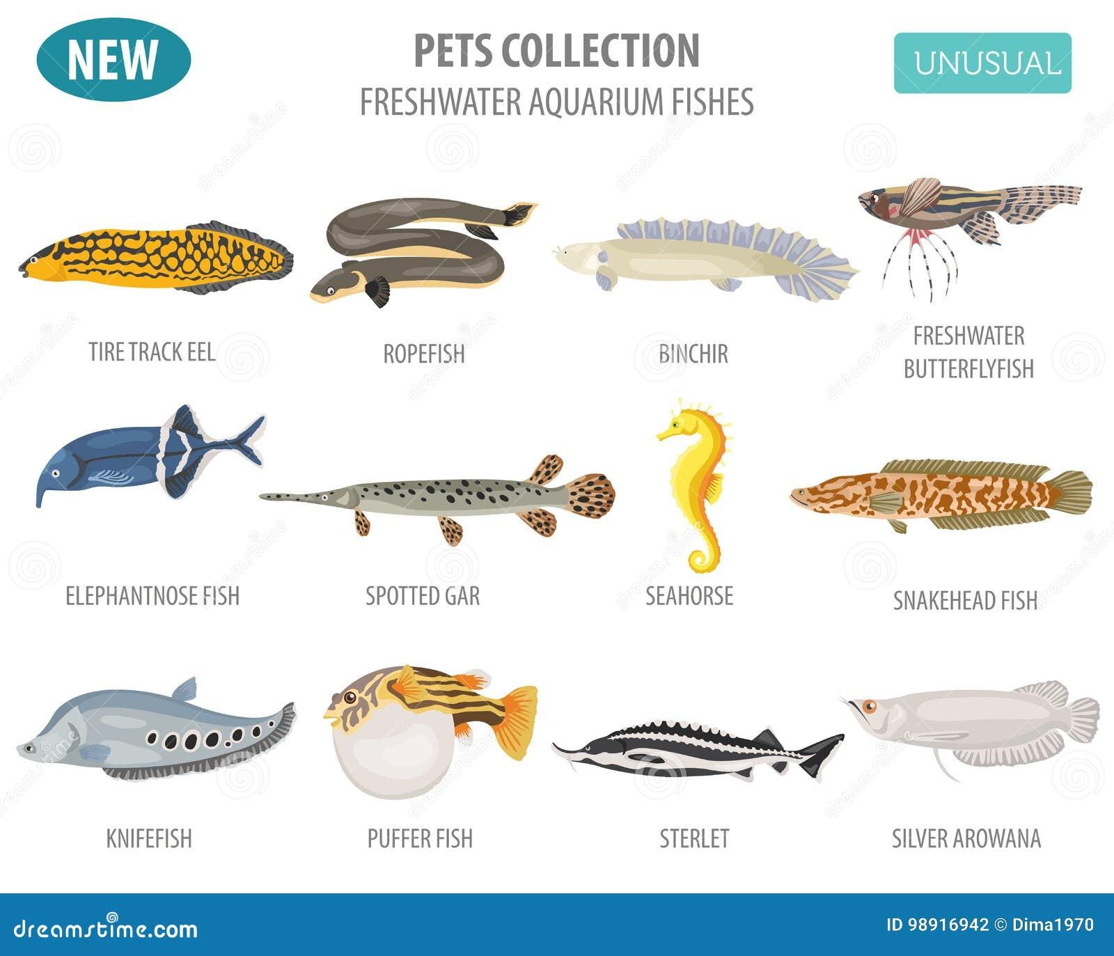 Unusual Freshwater Aquarium Fish Breeds Icon Set Flat Style Isol
