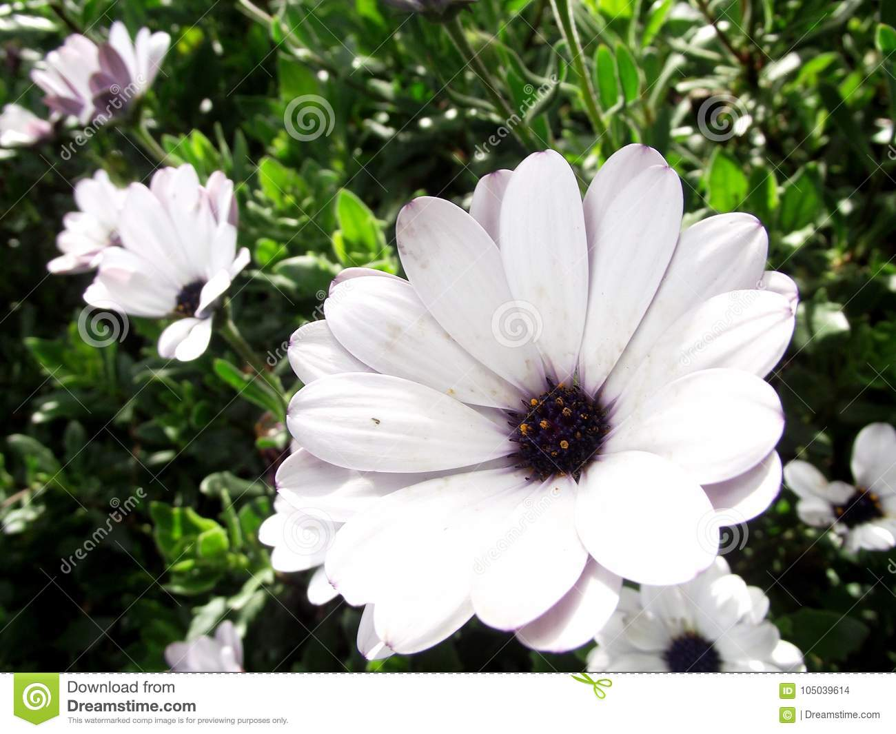 Unusual group of white flowers stock photo image of beautiful unusual group of white flowers izmirmasajfo