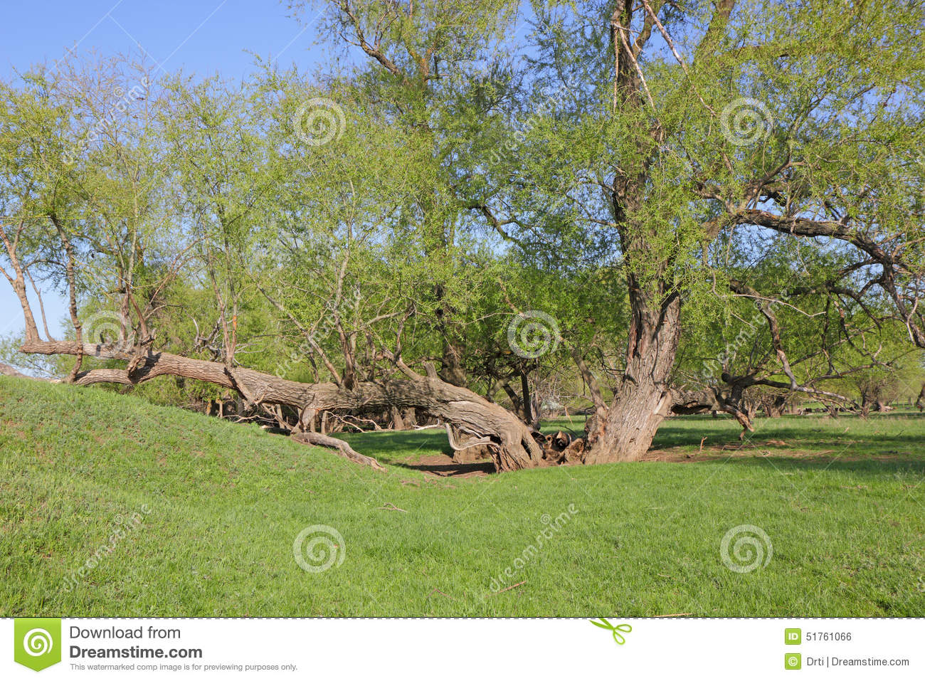Unusual Trees Related Keywords amp Suggestions Long Tail