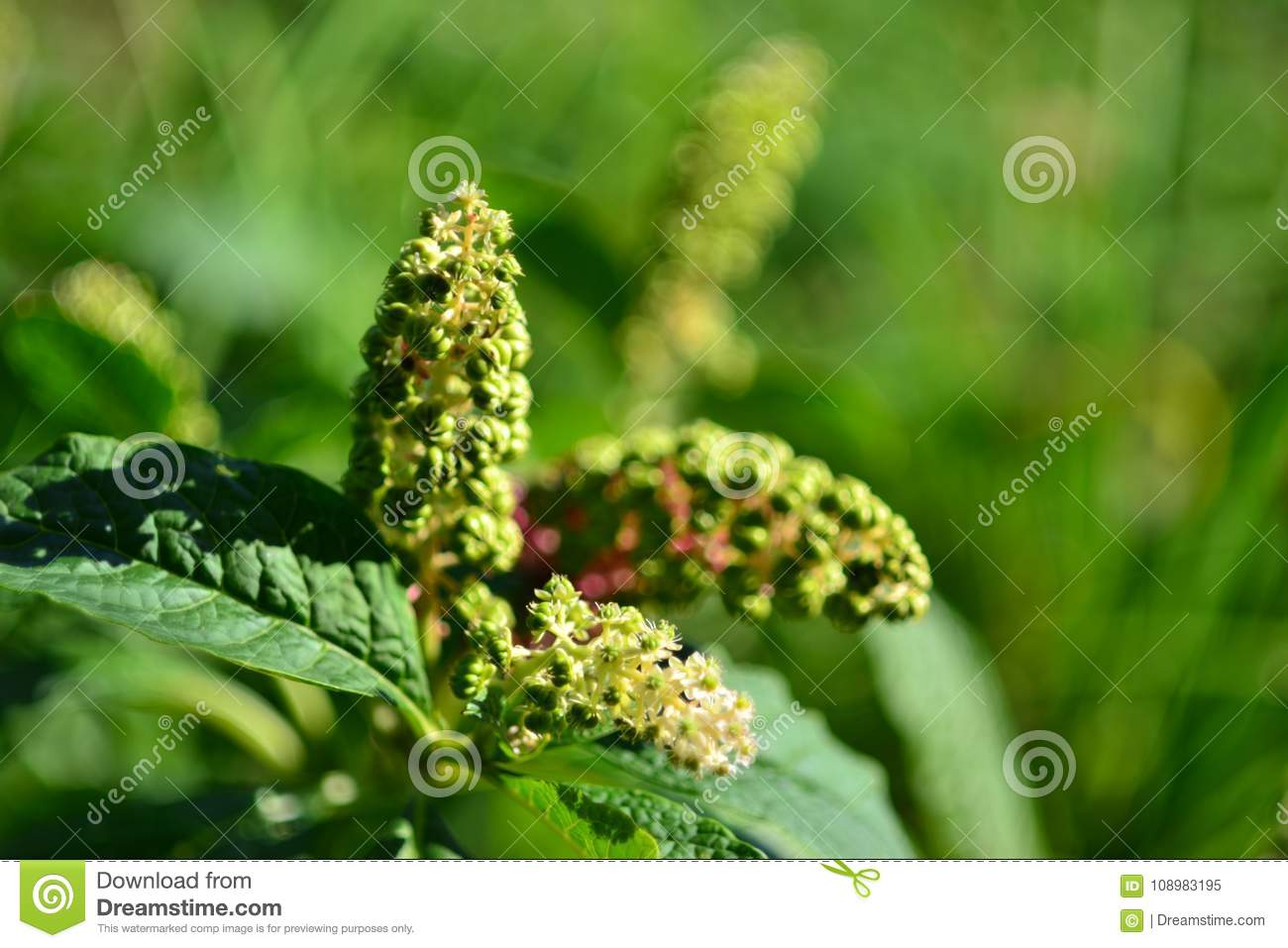 Unusual Plant With White Flowers And Green Background Stock Image