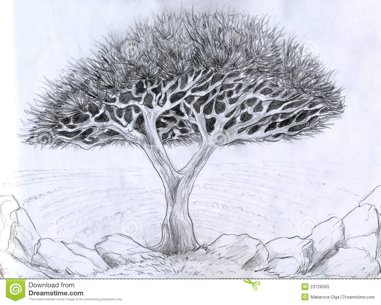 unusual tree pencil drawing stock photos image 23728593