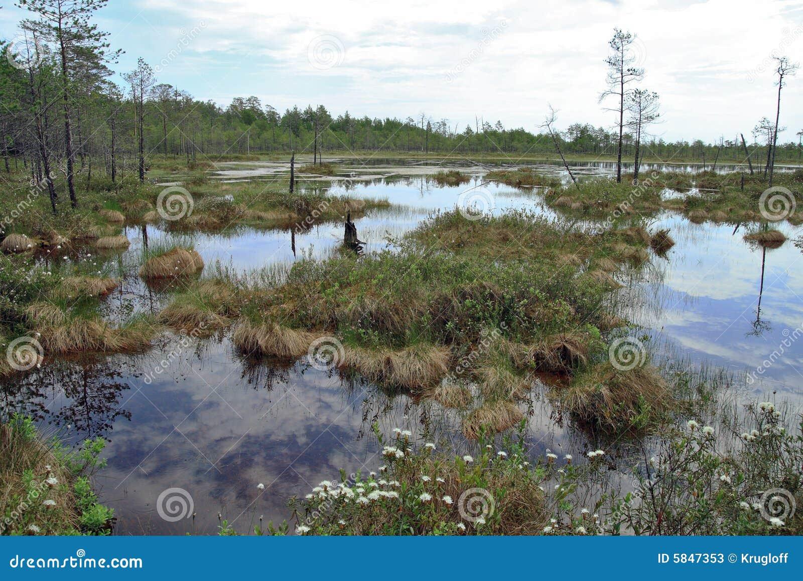 Vorratsbeh Lter unwegsamer sumpf im sibirischen taiga stockfotos bild 5847353