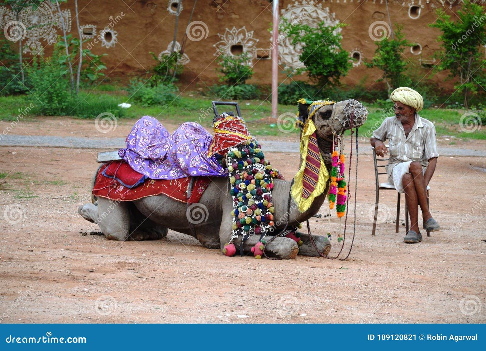 Uomo anziano con il suo cammello