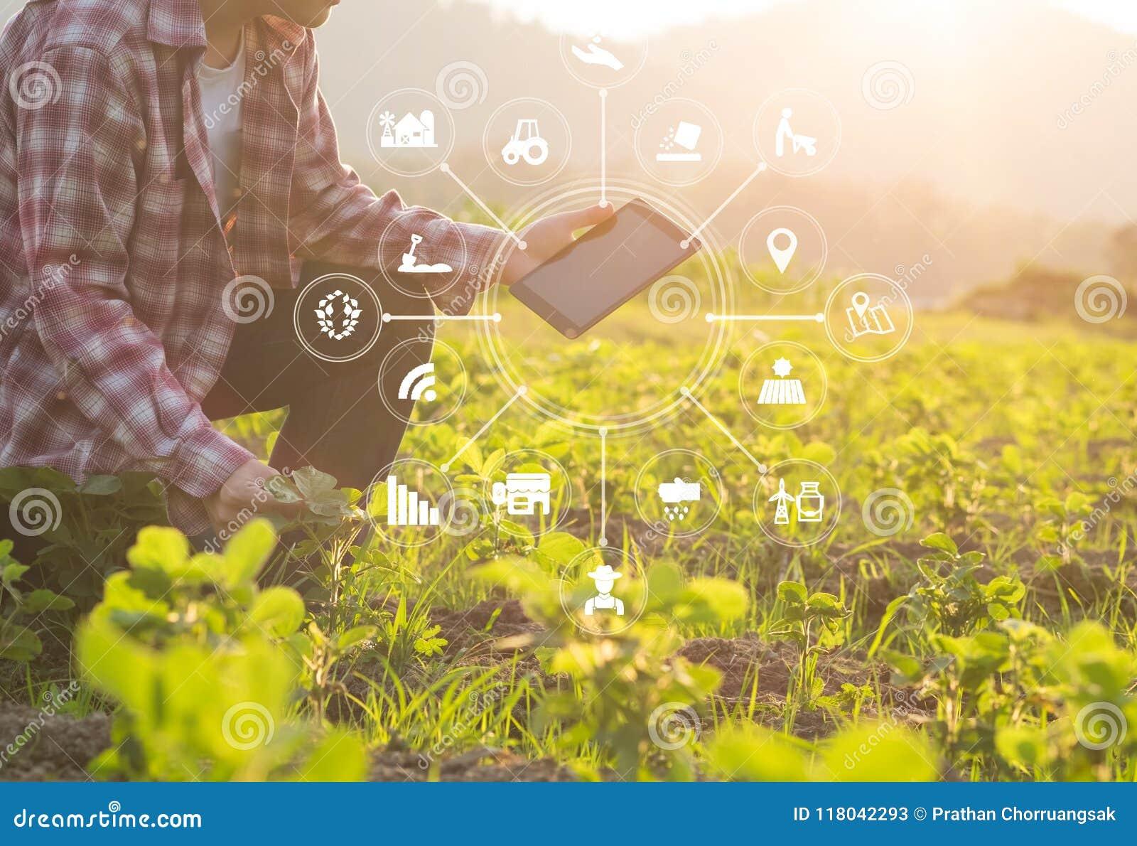 Uomo dell agricoltore di tecnologia di agricoltura che per mezzo del computer della compressa